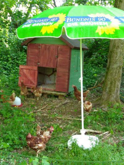 REttungsschirm, also ein Sonnenschirm vor einem Hühnerstall