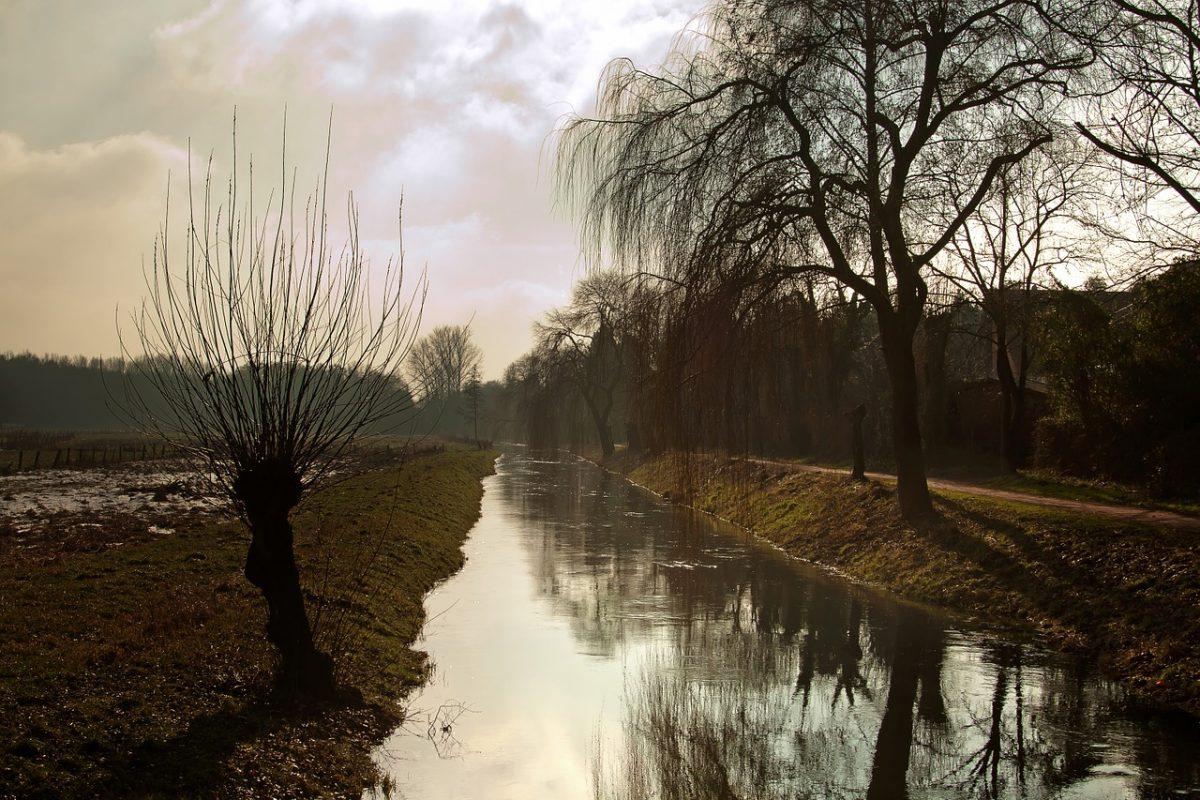 Niederrheinische Landschaft mit Fluss und Kopfweide